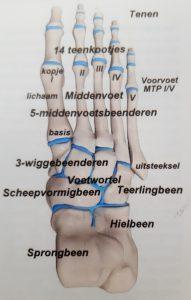 de voet